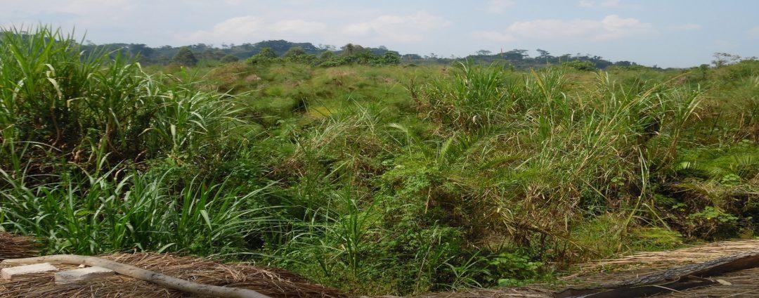 Umoja East Africa Fund Uganda